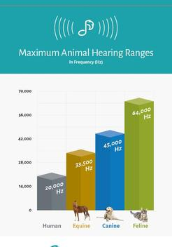 Our Pets hear more than Humans