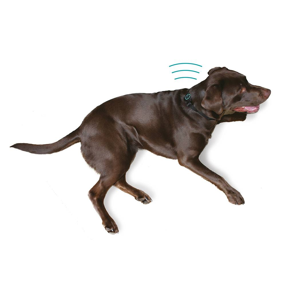 music device sits on back of dogs neck